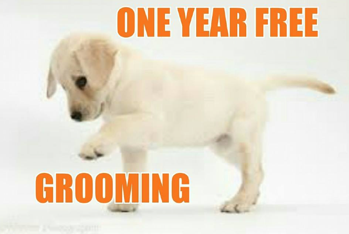 Fetch Dog Grooming Raheny
