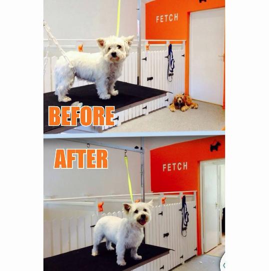 Dog Grooming Raheny